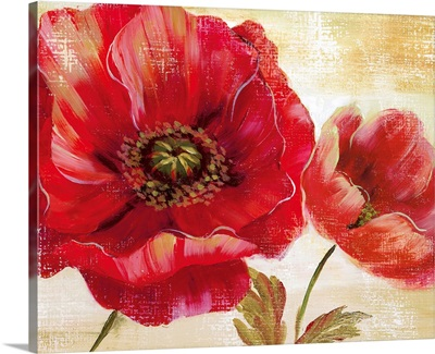 Passion for Poppies I