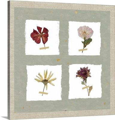 Pressed Blooms I