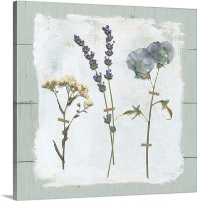 Pressed Flowers on Shiplap II