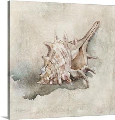 Seashell Textures I