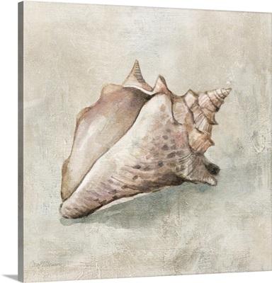 Seashell Textures II