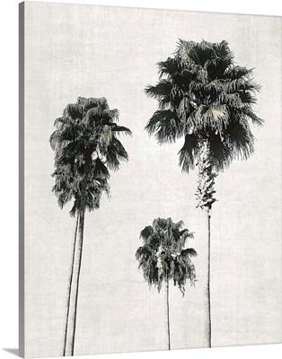 Sketchbook Palm