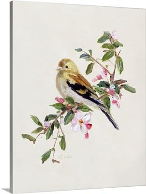 Spring Song Pine Grosbeak