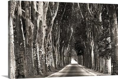 Stately Road