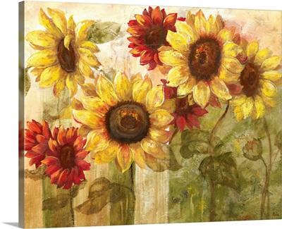 Sunflower's Delight