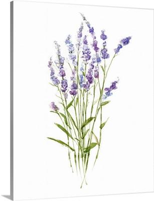 Sweet Lavender I