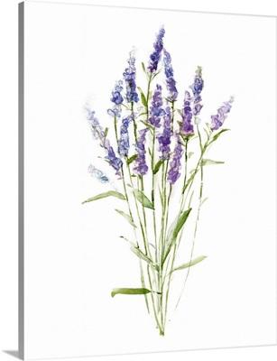 Sweet Lavender II