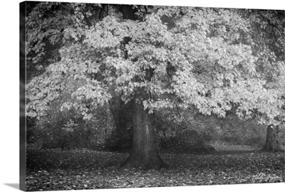 Autumn In Paris B