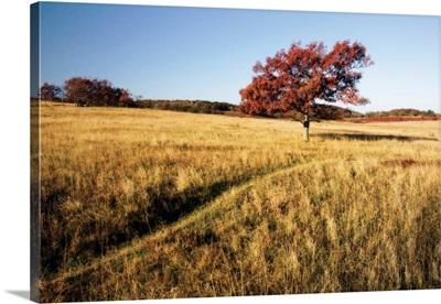 Autumn Meadow I