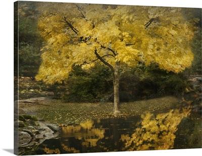 Autumn Reflections III