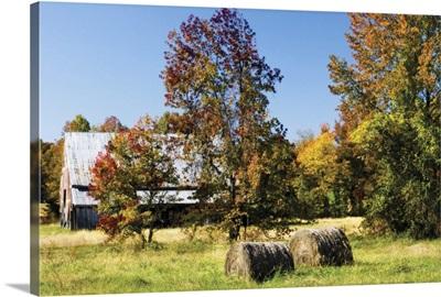 Autumn Scene I
