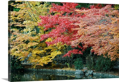 Autumn Trio I