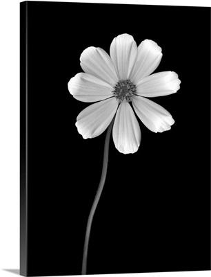 Ballet Flower I B