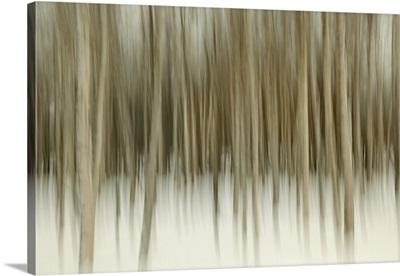 Birch Blur II