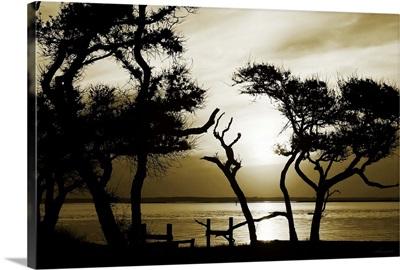 Blissful Shore I