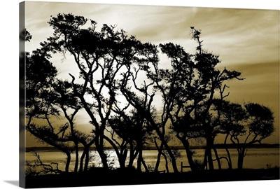 Blissful Shore II