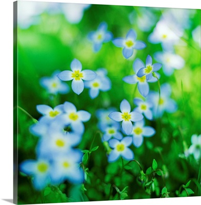 Blooms in Spring II