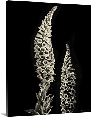 Botanical Elegance Foxglove