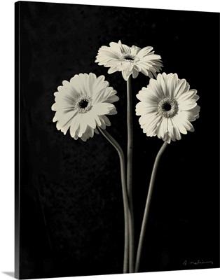 Botanical Elegance Gerbera - mini