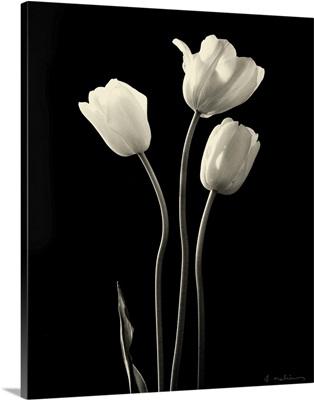 Botanical Elegance Tulips - mini