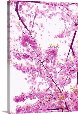 Bright Blooms II