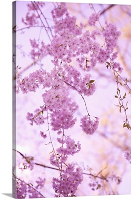 Bright Blooms III