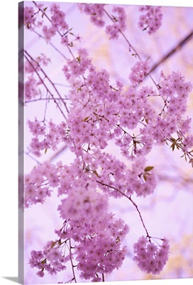 Bright Blooms IV
