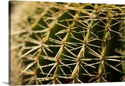 Cactus Detail I