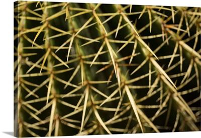Cactus Detail II