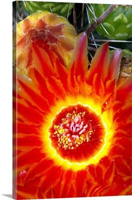 Cactus Flower VI