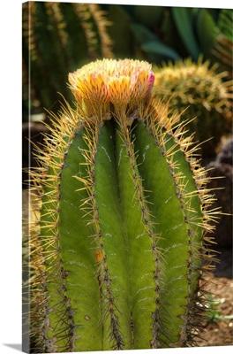 Cactus Flowers I