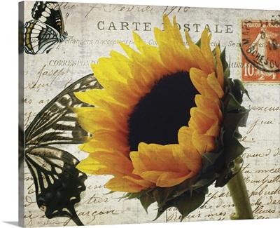 Carte Postale Sunflower