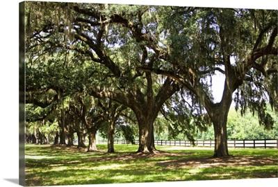 Charleston Oaks 2