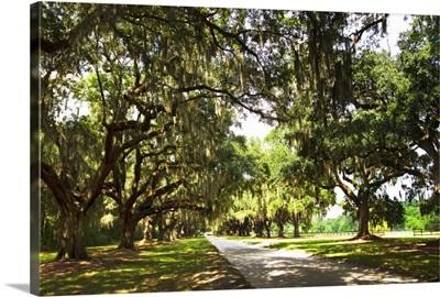 Charleston Oaks 3