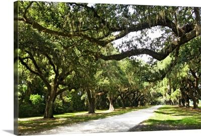 Charleston Oaks 4