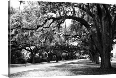 Charleston Oaks 9