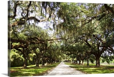 Charleston Oaks I