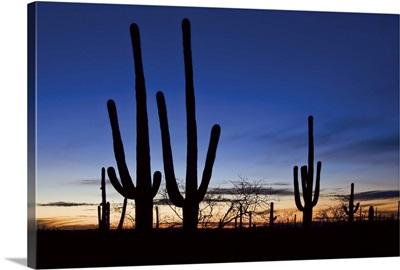 Classic Saguaro Sunset II