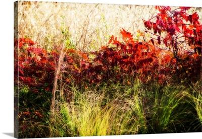Color Of Fall II