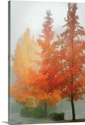 Colors in the Mist I