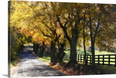 Country Road I