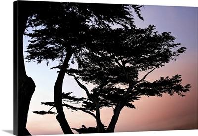 Cypress Silhouette I