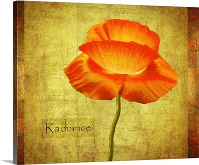 Dancing Poppy Radiance