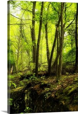 Deep Woods II