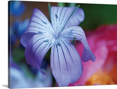 Delicate Flower I