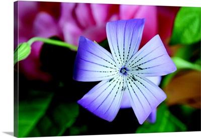 Delicate Flower II