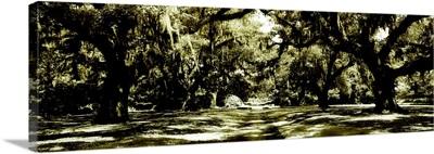 Druid Oaks Panel I