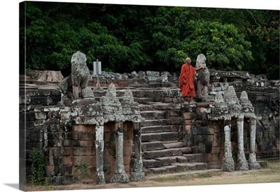 Elephant Terrace II