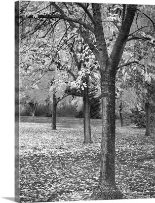 Fall Tree Grove I B