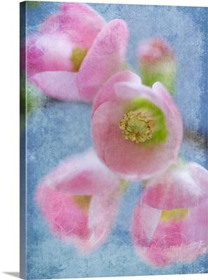 Flowering Quince II